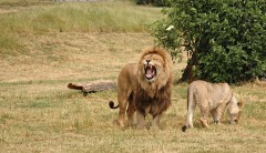Go on safari in Africa