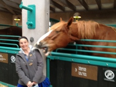 Erin being attacked by a horse