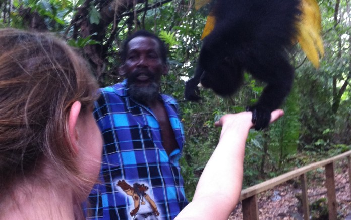 Howler monkeys grab your hand while eating from it