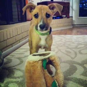 Tiny dog!