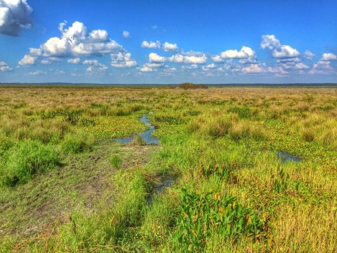 Payne's Prairie