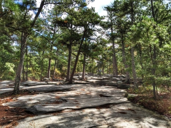 On the way up Stone Mountain