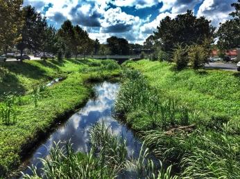 Hogtown Creek